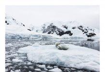 John Bozinov en la Antártida
