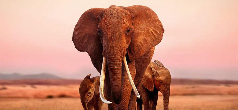The Elephant Queen - largometraje Apple