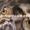 Grabado con un iPhone – Un respeto a la naturaleza
