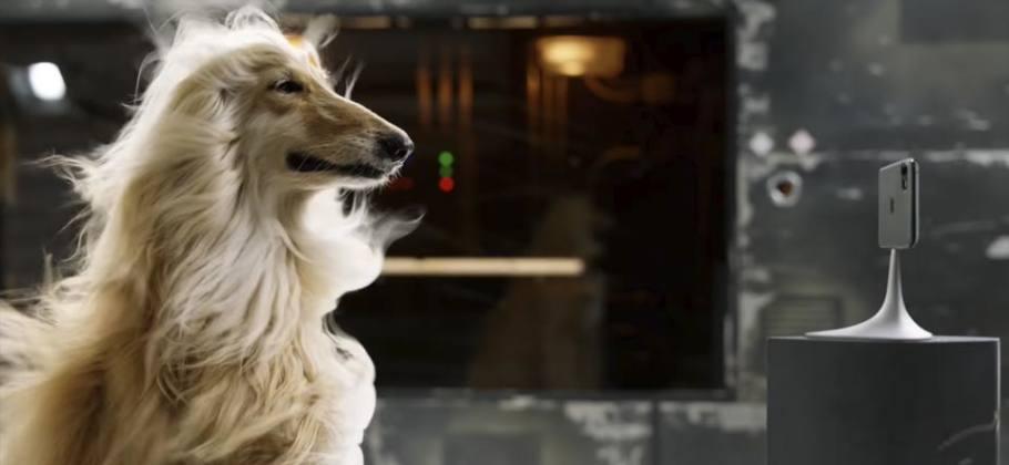 Anuncio iPhone 11 Pro y un perro