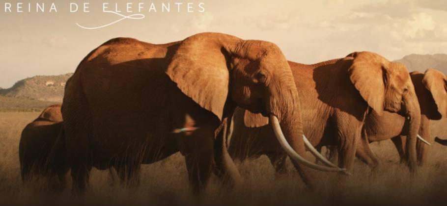 Reina de los elefantes - Documental Apple TV Plus