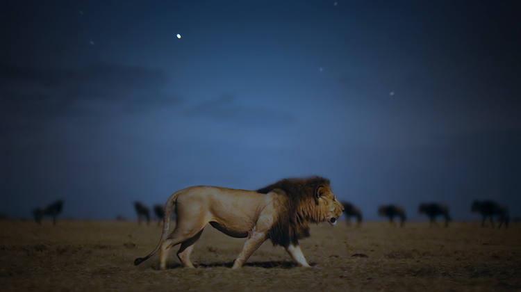 Documental Earth At Night In Color en Apple TV Plus