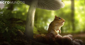 documental micromundos - Tiny World