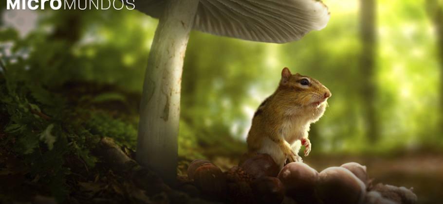 documental micromundos - Tiny World